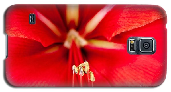 Galaxy S5 Case featuring the photograph Red Amaryliss by Les Palenik