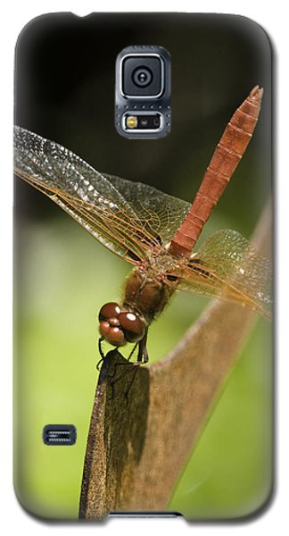 Galaxy S5 Case featuring the photograph Red Dragonfly by Betty Depee