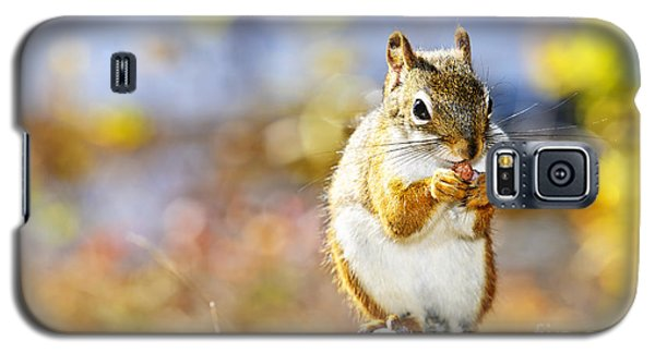 Red Squirrel Galaxy S5 Case