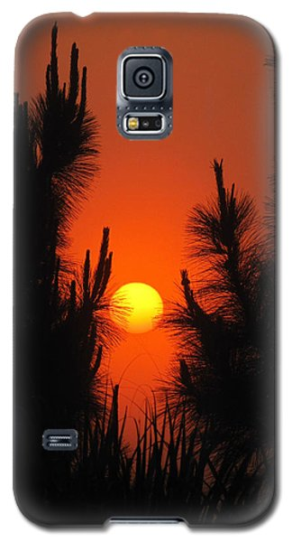 Rise And Pine Galaxy S5 Case