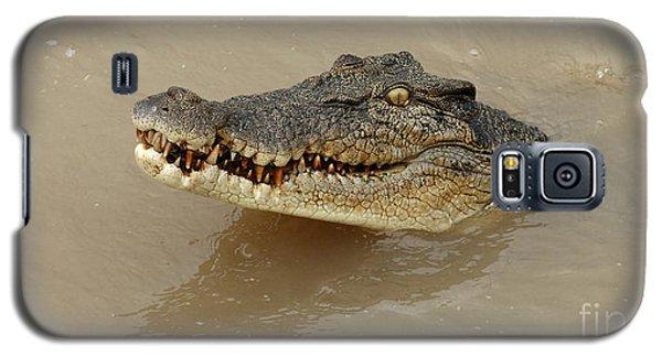 Salt Water Crocodile 3 Galaxy S5 Case by Bob Christopher
