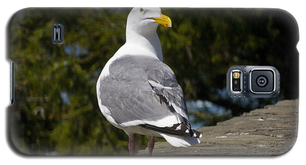 Galaxy S5 Case featuring the photograph Seagull by David Gleeson