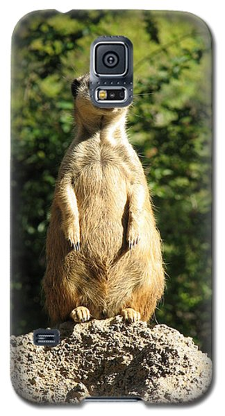 Galaxy S5 Case featuring the photograph Sentinel Meerkat by Carla Parris