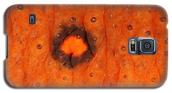 Skin Of Eastern Newt Galaxy S5 Case by Ted Kinsman