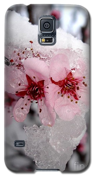Spring Blossom Icicle Galaxy S5 Case by Kerri Mortenson
