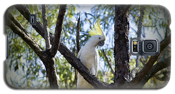 Sulphur Crested Cockatoo Galaxy S5 Case by Douglas Barnard
