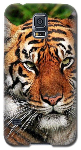 Sumatran Tiger Portrait Galaxy S5 Case