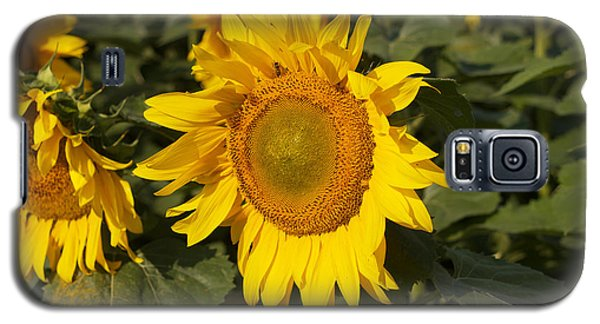 Galaxy S5 Case featuring the photograph Sun Flower by William Norton
