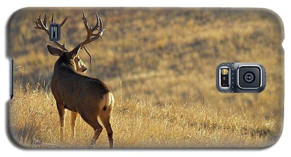 Sunrise Mule Deer Galaxy S5 Case