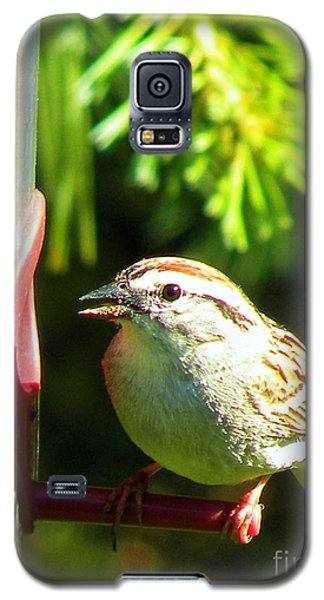 The Sparrow Galaxy S5 Case by J Jaiam