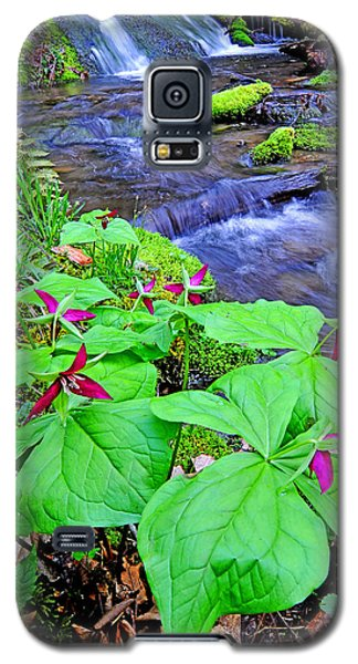 Wakerobin Along Cherry Creek Galaxy S5 Case by Alan Lenk