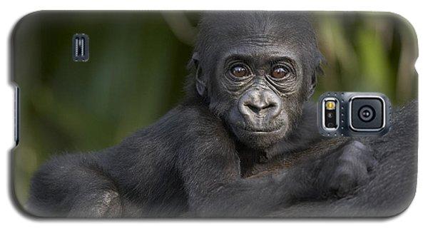 Western Lowland Gorilla Gorilla Gorilla Galaxy S5 Case