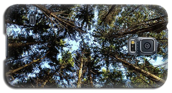 Galaxy S5 Case featuring the photograph Whispering Pines by Rachel Cohen