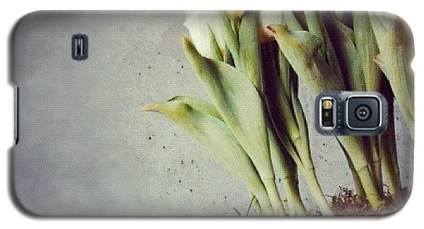 White Tulips In Bowl - Gray Concrete Wall Galaxy S5 Case by Matthias Hauser