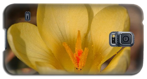 Yellow Crocus Galaxy S5 Case