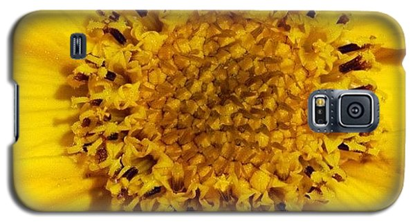 Detail Galaxy S5 Case - Yellow Flower Detail by Matthias Hauser