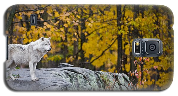 Arctic Wolf Galaxy S5 Case