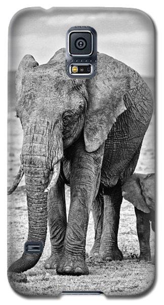 African Elephants In The Masai Mara Galaxy S5 Case