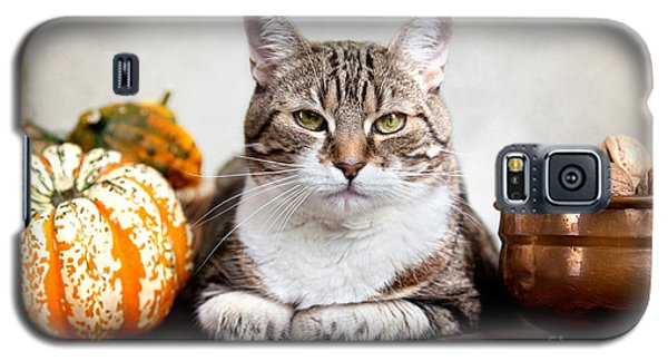 Cat And Pumpkins Galaxy S5 Case by Nailia Schwarz