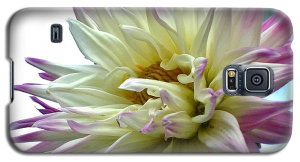 Galaxy S5 Case featuring the photograph Dahlia by Katy Mei