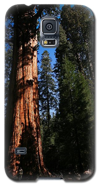 General Sherman Sequoia National Park Galaxy S5 Case