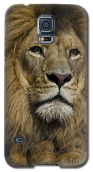 Lion Galaxy S5 Case