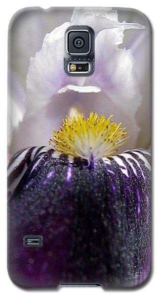 Galaxy S5 Case featuring the photograph Miniature Tall Bearded Iris Named Consummation by J McCombie