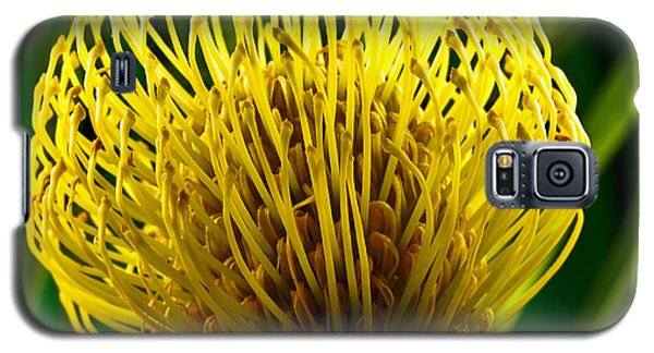 Picture Of A Pincushion Protea Galaxy S5 Case