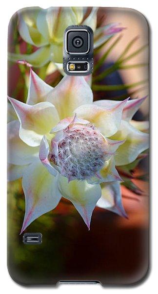Serruria Rosea Galaxy S5 Case by Werner Lehmann