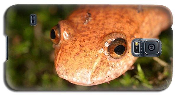 Spring Salamander Galaxy S5 Case by Ted Kinsman