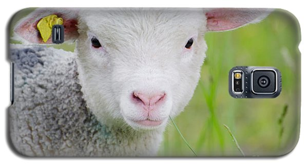 Young Sheep Galaxy S5 Case