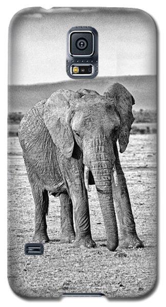 African Elephant In The Masai Mara Galaxy S5 Case