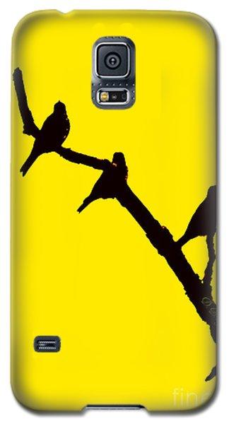 3 Birds On A Limb Galaxy S5 Case