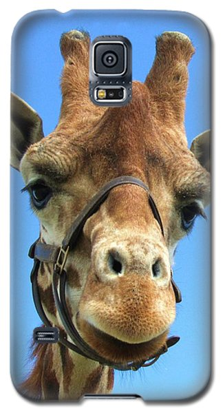 Giraffe Close Up  Galaxy S5 Case