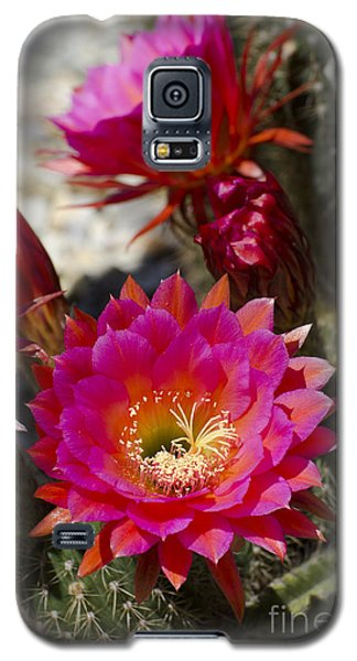 Pink Cactus Flowers Galaxy S5 Case