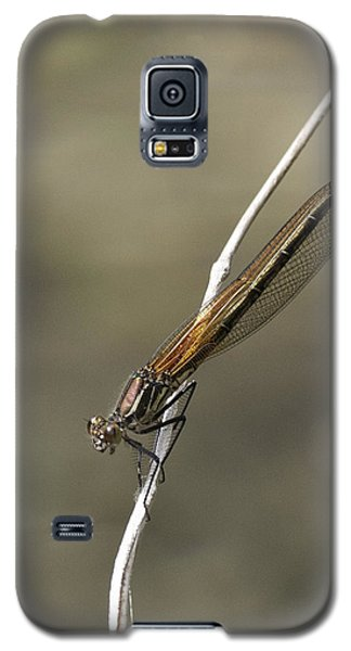 Galaxy S5 Case featuring the photograph Red Bluet by Betty Depee