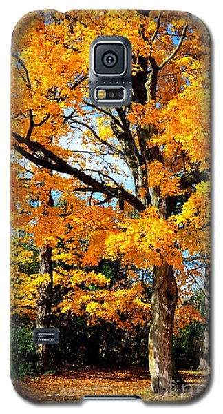 Galaxy S5 Case featuring the photograph Tree Of Gold by Joe  Ng