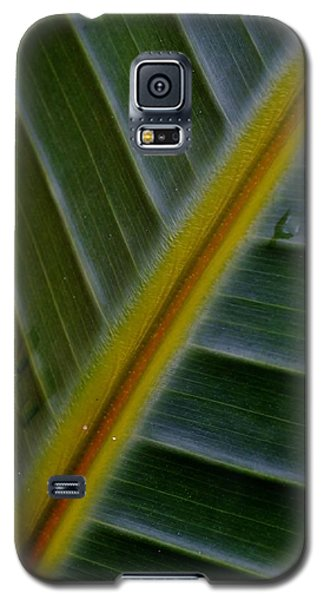 Galaxy S5 Case featuring the photograph Wild Banana Leaf by Werner Lehmann