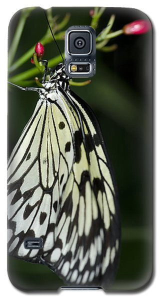Rice Paper Butterfly Galaxy S5 Case