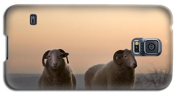Sheep Galaxy S5 Case - The Lamb by Angel Ciesniarska