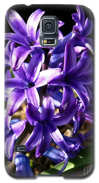 Galaxy S5 Case featuring the photograph Hyacinth Named Peter Stuyvesant by J McCombie