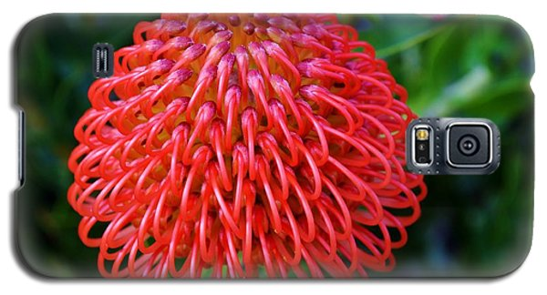 Common Pincushion Protea Galaxy S5 Case
