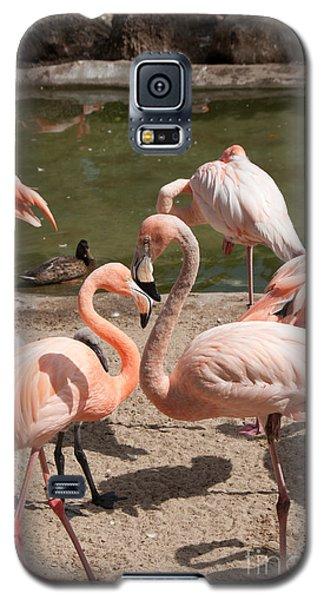 Flamingos Galaxy S5 Case by Carol Ailles
