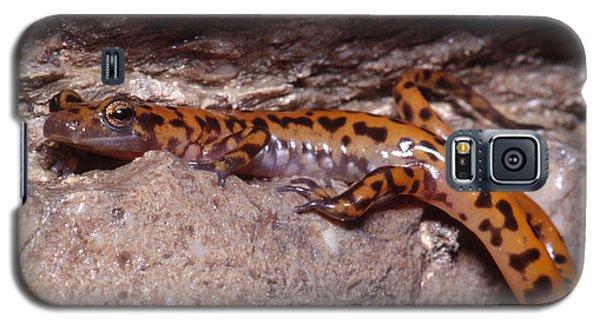 Cave Salamander Galaxy S5 Case by Dante Fenolio