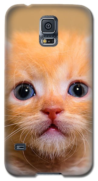 Kitty Galaxy S5 Case
