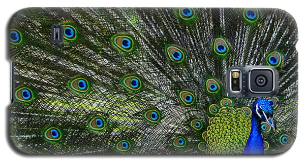 Galaxy S5 Case featuring the photograph Peacock by Brian Stevens