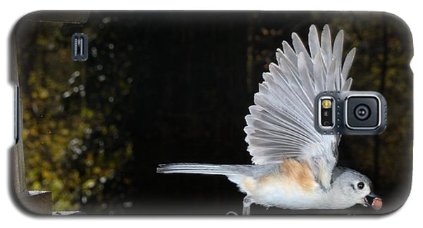 Tufted Titmouse In Flight Galaxy S5 Case by Ted Kinsman