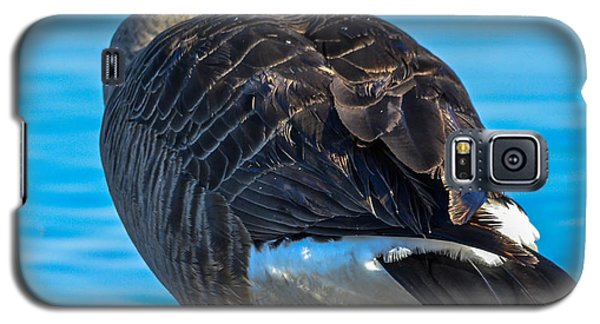 Galaxy S5 Case featuring the photograph Canadian Goose by Brian Stevens