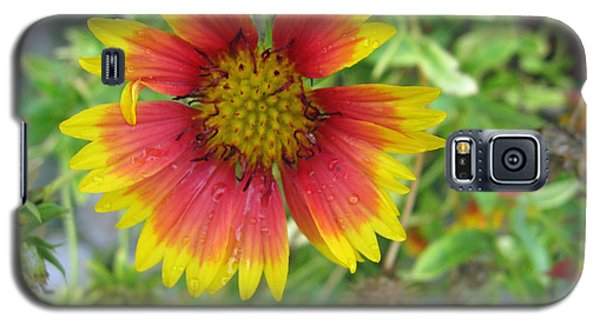 Galaxy S5 Case featuring the photograph A Beautiful Blanket Flower by Ashish Agarwal