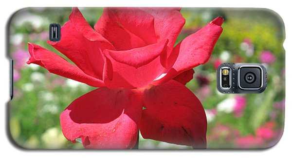 Galaxy S5 Case featuring the photograph A Beautiful Red Flower Growing At Home by Ashish Agarwal